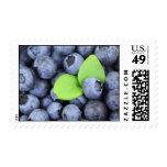 Blueberries Postage Stamp