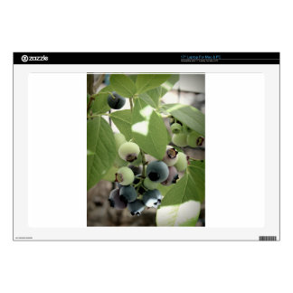 """Blueberries Skin For 17"""" Laptop"""
