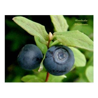 Blueberries, Unalaska Island Postcard