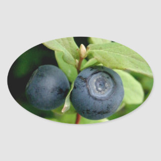 Blueberries, Vaccinium ovalifolium Oval Sticker