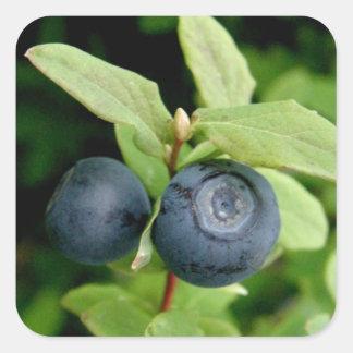 Blueberries, Vaccinium ovalifolium Square Sticker