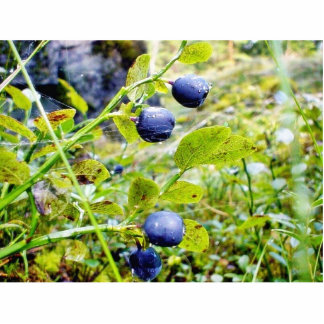 Blueberries With Green Leaves Photo Sculptures