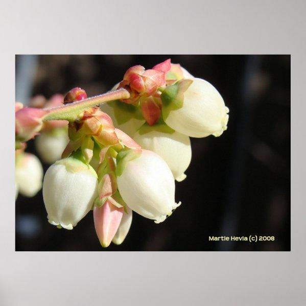 Blueberry Blossom Cluster Print