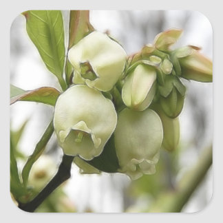 Blueberry Blossoms Square Sticker