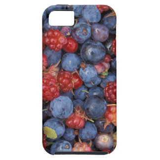 Blueberry Blue Colorful Fruit Food Sweet Destiny iPhone 5 Cover