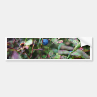 Blueberry Bumper Sticker