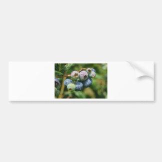Blueberry Bush Bumper Sticker