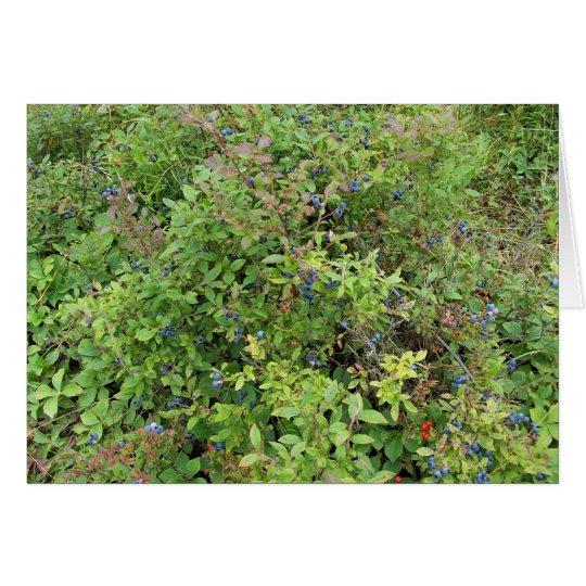 Blueberry Bush Card