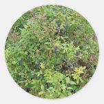 Blueberry Bush Classic Round Sticker