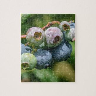 Blueberry Bush Jigsaw Puzzle