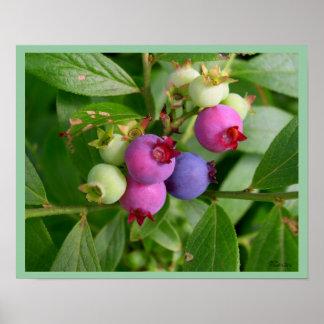 Blueberry Bush Print