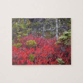 Blueberry bushes and pines jigsaw puzzle