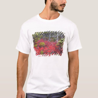 Blueberry bushes and pines T-Shirt