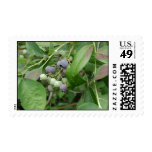 Blueberry Cluster Postage