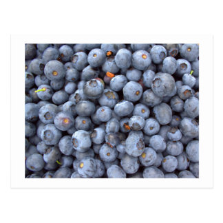 blueberry fruits, photo taken in a blueberry farm postcard