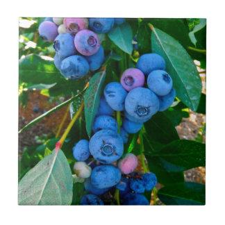 Blueberry Heaven Tile