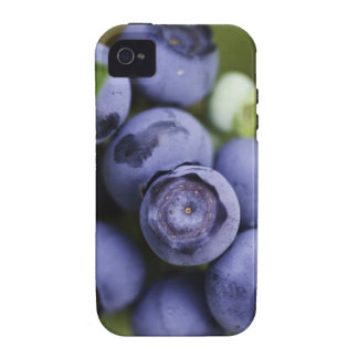 blueberry lover Case-Mate iPhone 4 cover