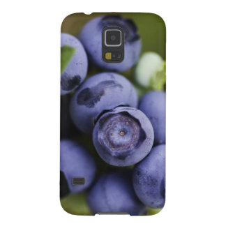 blueberry lover cases for galaxy s5