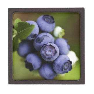 blueberry lover premium gift boxes