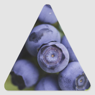 blueberry lover triangle sticker