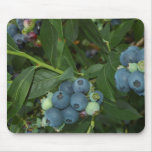 Blueberry Mouse Pad