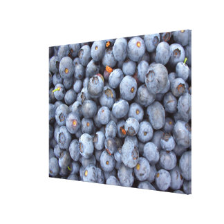 Blueberry photography. canvas print