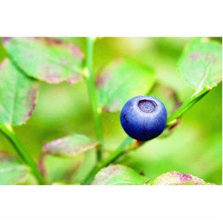 Blueberry Photo Cutouts