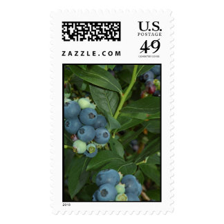 BLUEBERRY POSTAGE STAMP