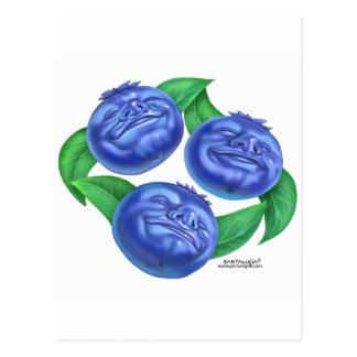 blueberry postcard