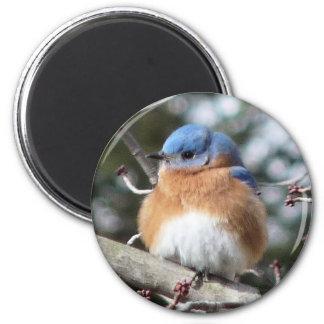 Bluebird 2 Inch Round Magnet
