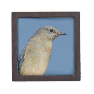 bluebird and blue sky premium jewelry box