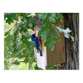 Bluebird at Home Postcard