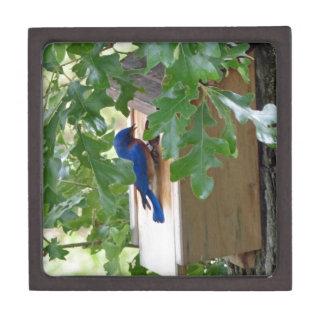 Bluebird at Home Premium Trinket Boxes