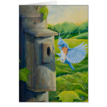 Bluebird at Sunrise Card