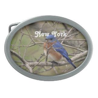 Bluebird Belt Buckles