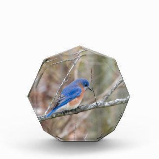 Bluebird Blue Bird in Tree Award