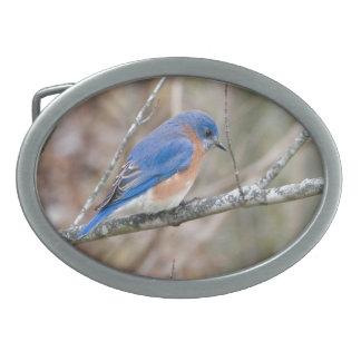 Bluebird Blue Bird in Tree Belt Buckles