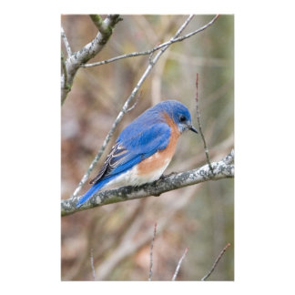 Bluebird Blue Bird in Tree Stationery
