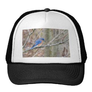 Bluebird Blue Bird in Tree Trucker Hat