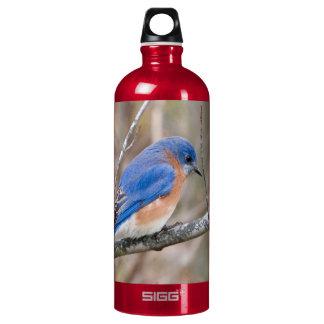 Bluebird Blue Bird on Tree Branch Water Bottle