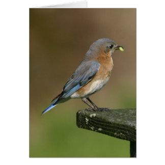Bluebird breakfast card