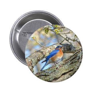 Bluebird Button