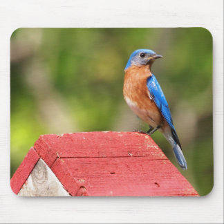 Bluebird Comes Home Mouse Pad