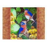 Bluebird con la frontera tarjetas postales