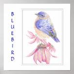Bluebird de la acuarela, colección del pájaro póster