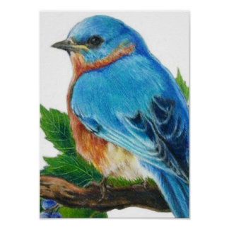 Bluebird de la baya póster
