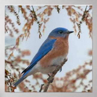 Bluebird de la felicidad póster