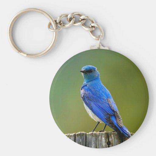 Bluebird de la montaña llavero redondo tipo pin