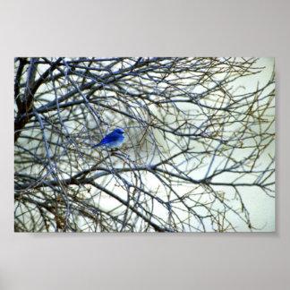 Bluebird de la montaña póster