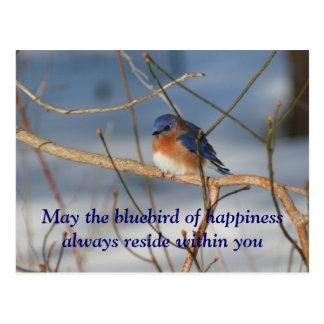 Bluebird de la postal de la naturaleza de la felic